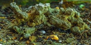 Странные формы на пляже Стоковое Изображение RF