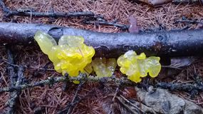 Странный грибок Стоковое Изображение