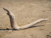 Странный деревянный выхват в форме змейки лежит на песчаном пляже моря Ob стоковые изображения