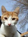 Странный кот Стоковая Фотография
