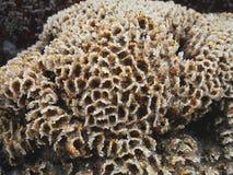 Странный морской организм в середине скал стоковое изображение rf