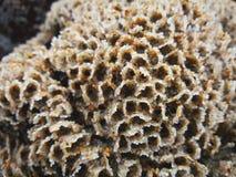Странный морской организм в середине скал стоковые фото