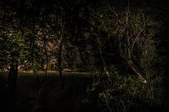 Странный силуэт в темном пугающем лесе на ноче, светах мистического ландшафта сюрреалистических с страшным человеком Стоковая Фотография