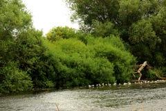 Странный форменный пень дерева на реке Стоковые Изображения RF