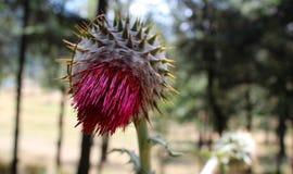 Странный цветок горы Стоковое Фото