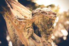 Страсть Иисуса Христоса стоковые фото