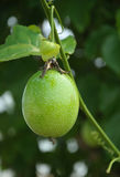 страсть плодоовощ Стоковое фото RF