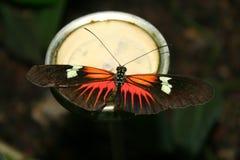 страсть цветка бабочек Стоковое Фото