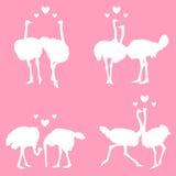 страусы влюбленности бесплатная иллюстрация