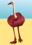 страус Африки Стоковое Изображение