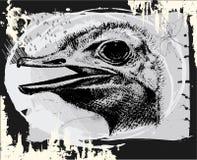 страус иллюстрация вектора