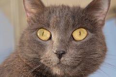 страх стороны кота Стоковое Изображение RF