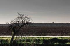 Страшная сцена высушенного старого дерева полем Стоковая Фотография