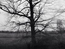 Страшное дерево Стоковые Изображения