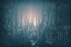 Страшные готические залитые лунным светом туманные древесины вечером Большой для проектов ужаса, готических, страшного, и страшно стоковое изображение