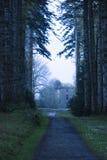 Страшные деревья Стоковое фото RF