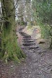 страшные лестницы Стоковое Изображение