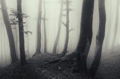 Страшные древесины хеллоуина с загадочным туманом Стоковое Изображение RF