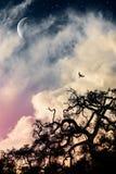 Страшный дуб и луна Стоковые Изображения RF