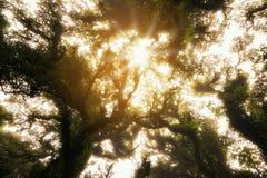 Страшный лес смотря вверх Стоковая Фотография