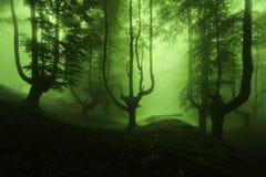 Страшный лес с зеленым туманом Стоковая Фотография RF