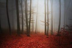 Страшный лес fogy Стоковые Изображения