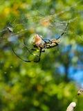 Страшный паук в своей сети стоковые изображения