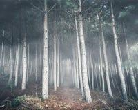 Страшный темный лес стоковая фотография