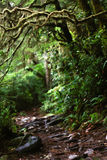 Страшный crawly след в древесинах стоковые изображения rf