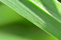 Стрельба макроса зеленой травы стоковые фотографии rf