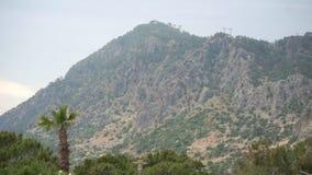 Стрельба Timelapse перерастанная с холмом растительности высоким, так же, как верхние части деревьев и пальм пошатывая в ветре сток-видео