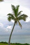 стременое cay Багам большое Стоковая Фотография RF