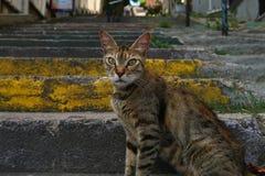 Стремительный кот Стоковые Изображения RF