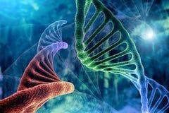 Стренга ДНК и перевод концепции 3D исследования онкологии раковой клетки, абстрактная предпосылка, смешивать 2 структур иллюстрация вектора