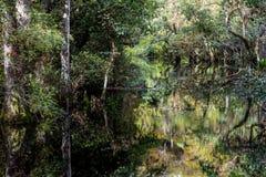 Стренга Sweetwater Стоковое фото RF