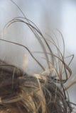 Стренги открытых всем ветрам волос Стоковые Фотографии RF