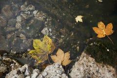 Стрехи плавая взгляд сверху Стоковое Изображение