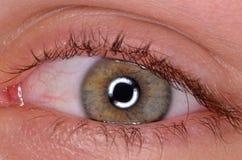 стрельба макроса глаза eos камеры 20d людская Стоковое Фото