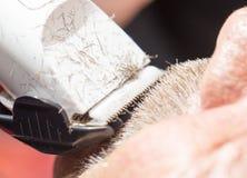 Стрижка усика на салоне красоты Стоковые Изображения RF