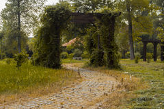 Строб вполне зеленых листьев Стоковое фото RF