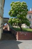 строб города старый Стоковые Фото