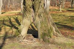 Строб дерева Стоковые Фото