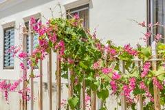Строб и цветки идя вокруг взглядов Otrobanda Curacao Стоковые Фотографии RF