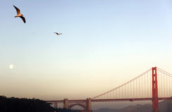 строб моста золотистый Стоковое Изображение RF
