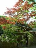 Строб на дворце Changdeok Стоковые Фото