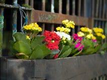 строб сада Стоковое Изображение RF