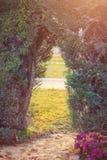Строб, сделанный кустарников в ботаническом саде Стоковое фото RF