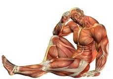 строители тела muscle усаженное представление бесплатная иллюстрация