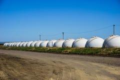 Строка белых пластичных домов в форме шарика, расти молодого молокозавода телится в питомнике Стоковая Фотография