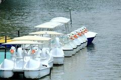 Строка белых шлюпок лебедя плавая на зеленую воду в парке Стоковые Фото